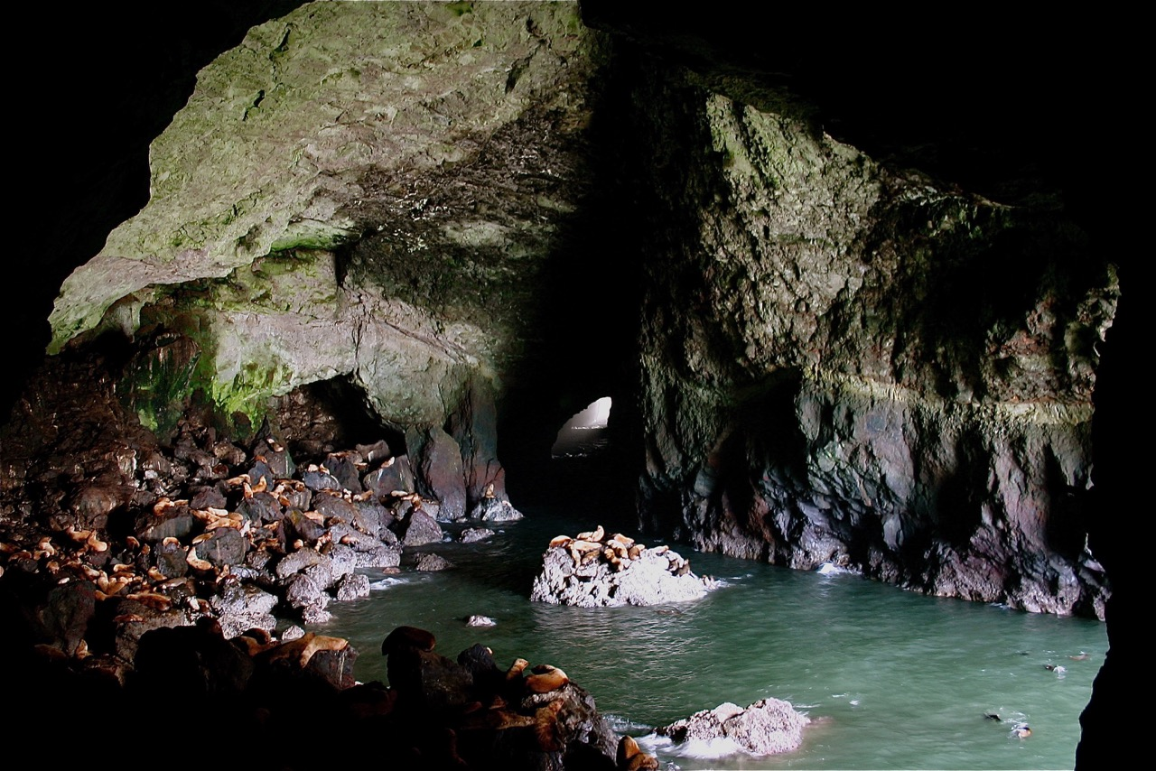 Sea Lion Caves | Florence Area Chamber of Commerce