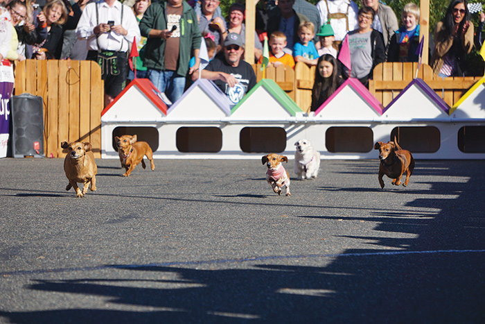 Wiener-Dog-Races-Siuslaw-News