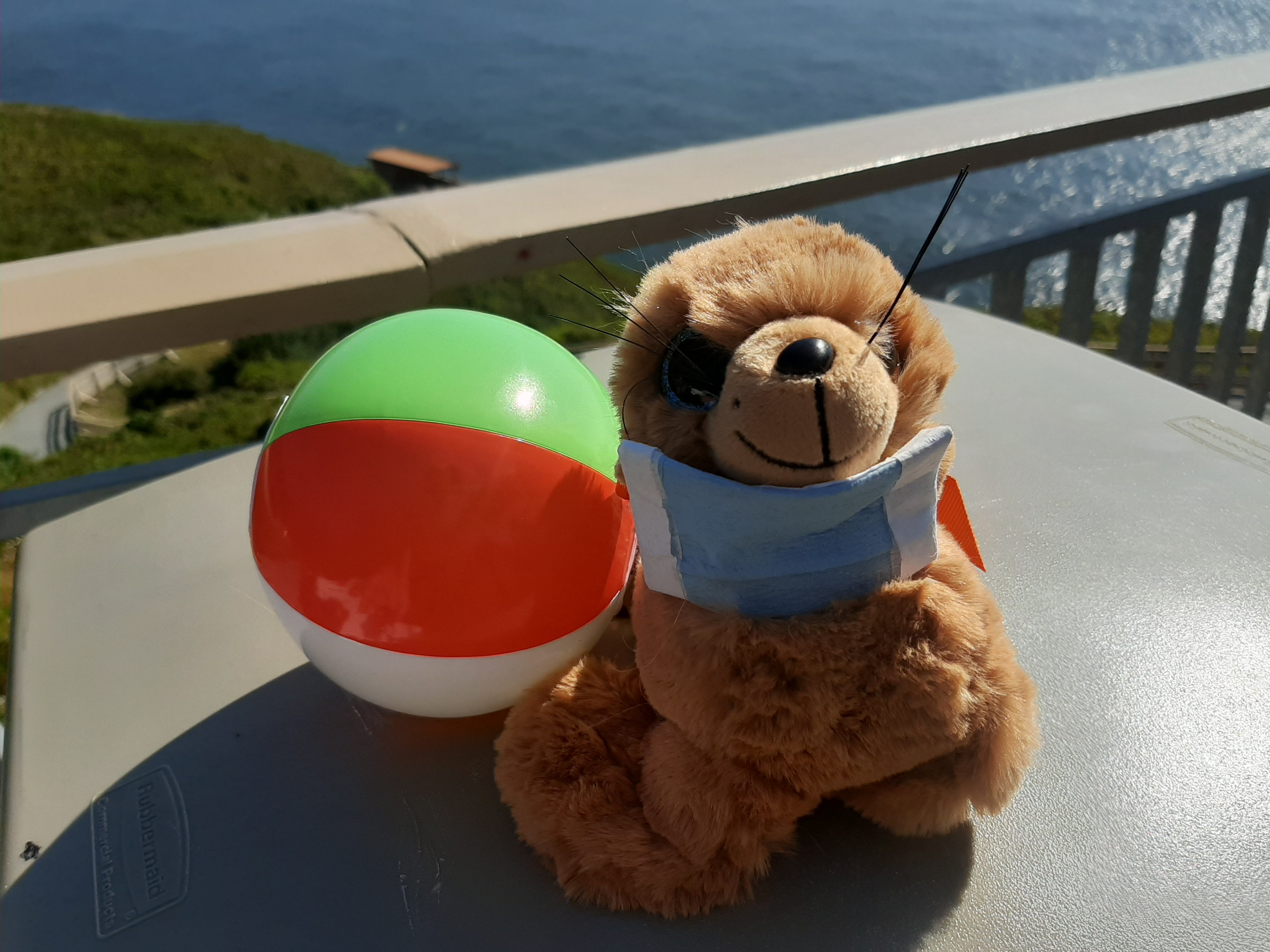 FIND SAMI THE SEA LION, WIN PRIZES THIS SUMMER